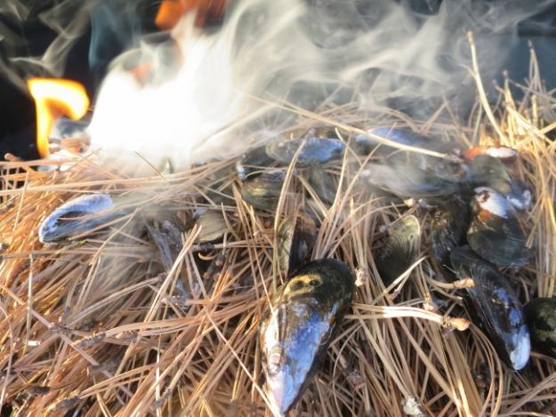 pine needle musselsi.JPG