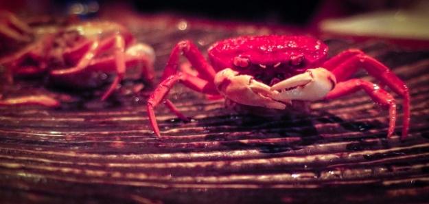 crabclo2PSi.JPG