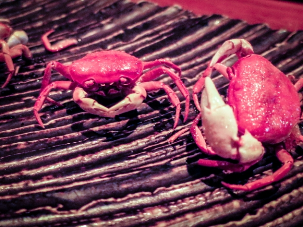 crabfight rtPSi.JPG